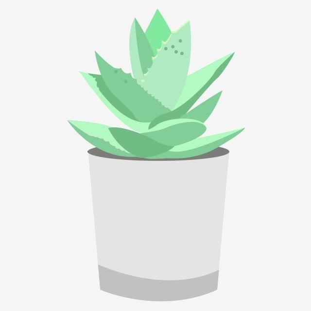 Dessin Animé De Plantes En Pot D Aloès Plantes En Pot Aloe