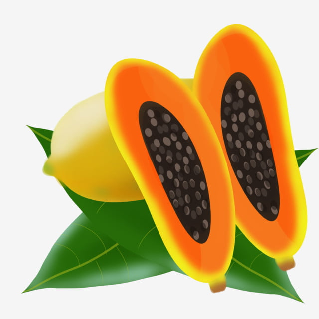 fruit melon papaya papaya seeds fruit melon papaya png transparent clipart image and psd file for free download pngtree