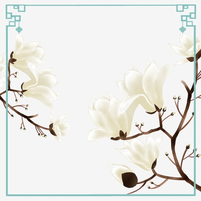 Magnolia Tree Flower Spring Flower Dry Lotus Early Spring Floral