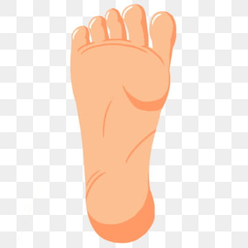Feet Clipart Png Images Vector And Psd Files Free Download On Pngtree