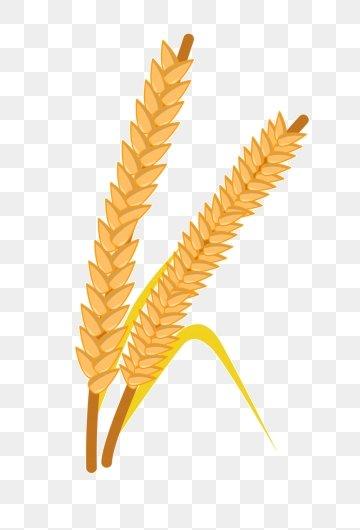 سنبلة القمح Png الصور ناقل و Psd الملفات تحميل مجاني على Pngtree