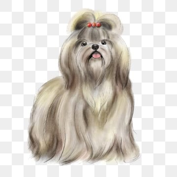 The Lhasa Apso Dog Accessories4 Aquarela Ilustracao Animal