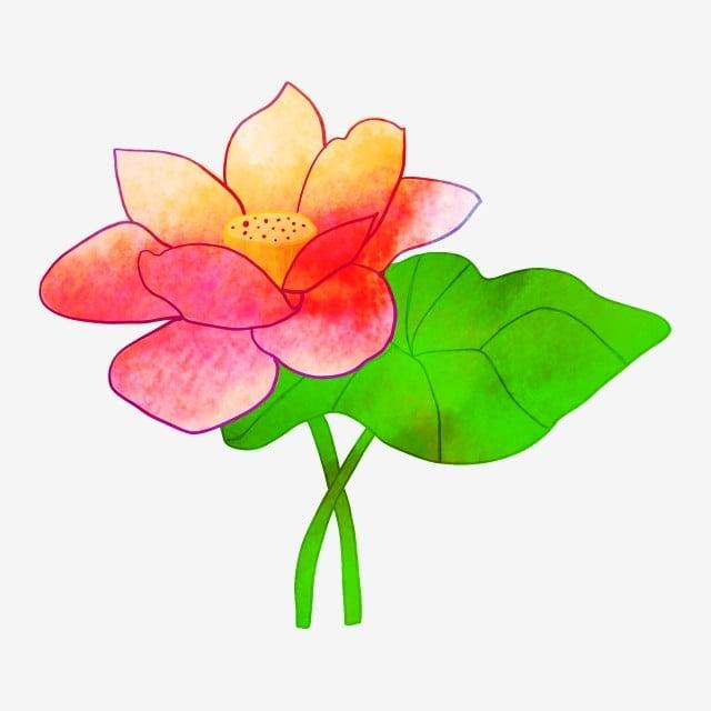 53+ Gambar Bunga Teratai Kartun Paling Baru