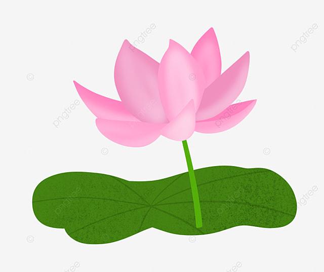 Lotus Flower Cartoon Illustration Cartoon Illustration Lotus