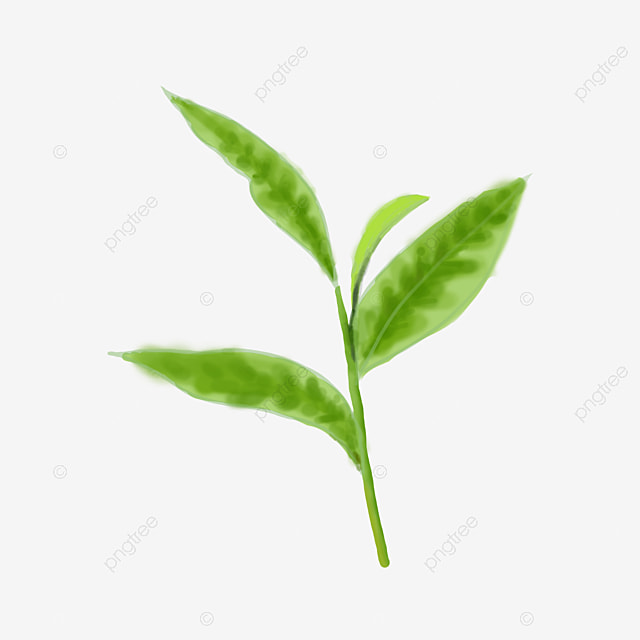 Simulation Of Fresh Green Tea Leaves Simulation Tea Leaves Hand Painted Tea Leaves Hand Painted Leaves Png Transparent Clipart Image And Psd File For Free Download
