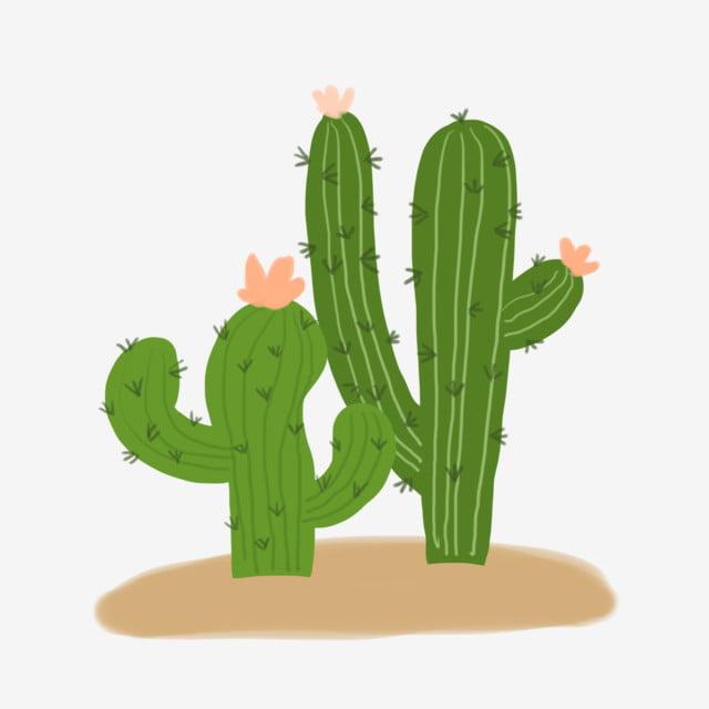 Cactus desert. Sand png transparent clipart