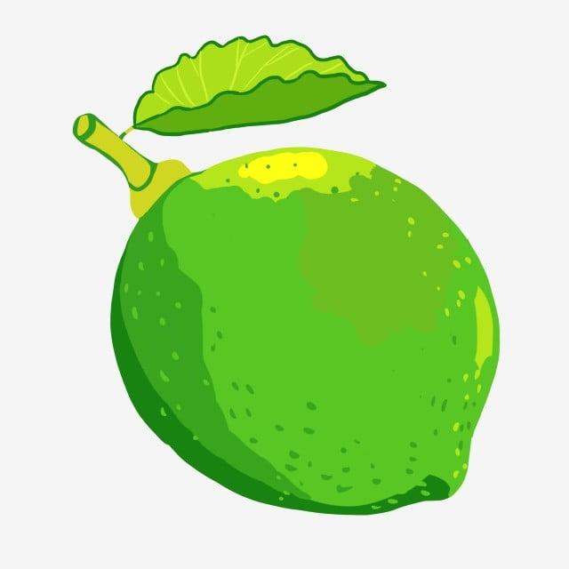 ilustrasi lemon buah hijau buah buah musim panas jeruk nipis png transparan gambar clipart dan file psd untuk unduh gratis jeruk nipis png transparan