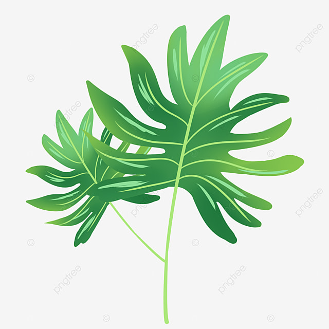 Large Leaf Tropical Plant Large Leaves Tropical Plants Small