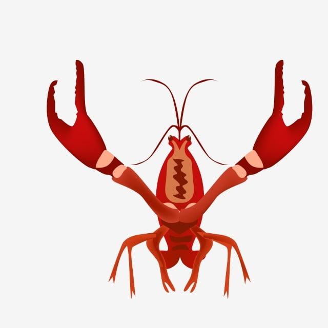 Live Shrimp Aquatic Lobster Illustration Cartoon Seafood Live Shrimp Aquatic Lobster Png And Vector With Transparent Background For Free Download