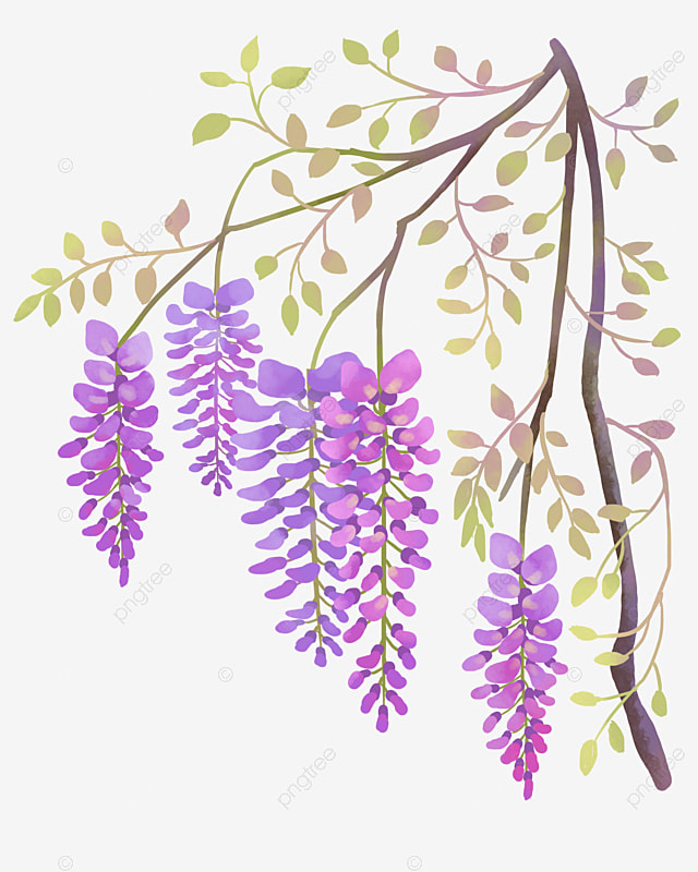 Wisteria Flower Png Svg Library Stock - Wisteria No Background Clipart -  Free Transparent PNG Download - PNGkey