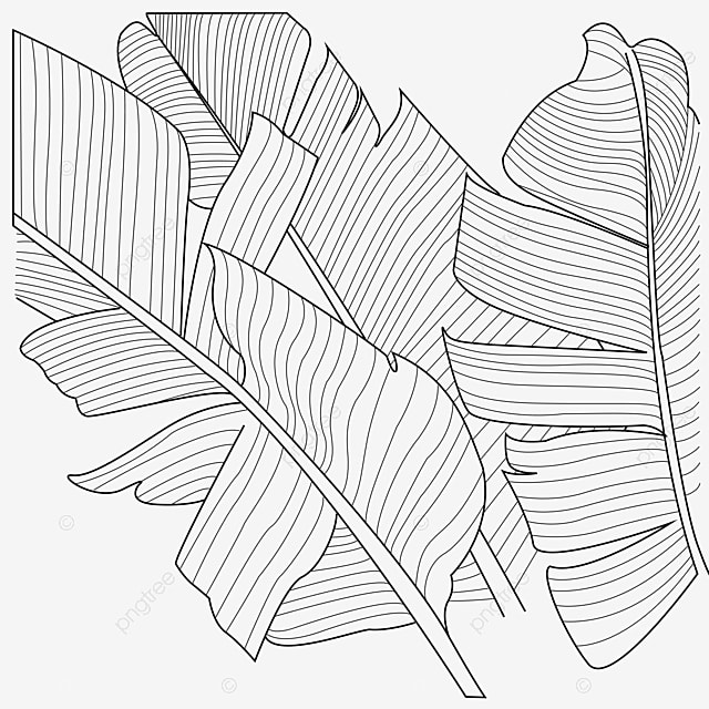 gambar garis naungan daun pisang daun pisang daun shading png dan vektor dengan latar belakang transparan untuk unduh gratis gambar garis naungan daun pisang daun