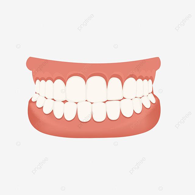 Dental Denture Dentistry Denture Medical Treatment Png Transparent Clipart Image And Psd File For Free Download
