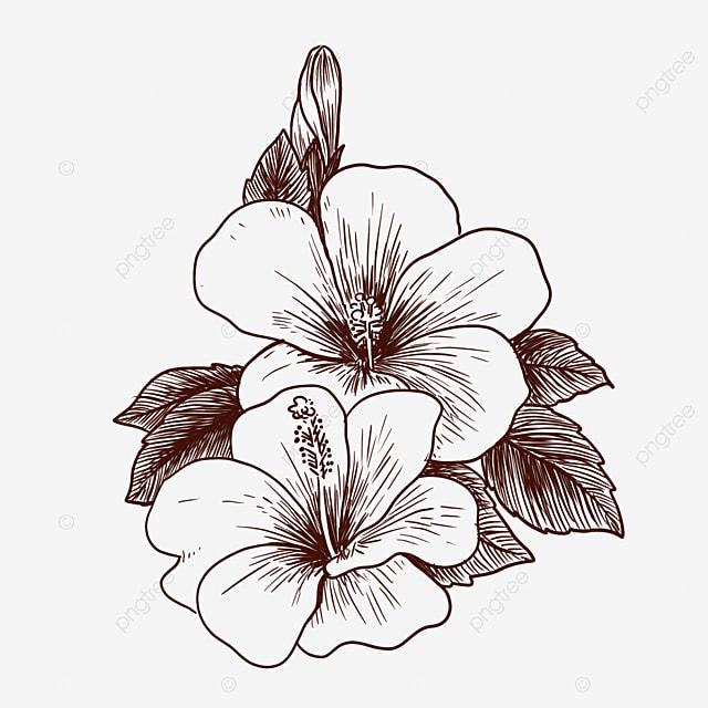 Gambar Bunga Lukisan Garis Clipart Hitam Dan Putih Lukisan Garis Bunga Png Dan Psd Untuk Muat Turun Percuma