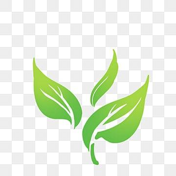Green Tea Leaf png download - 1024*852 - Free Transparent Tea png Download.  - CleanPNG / KissPNG