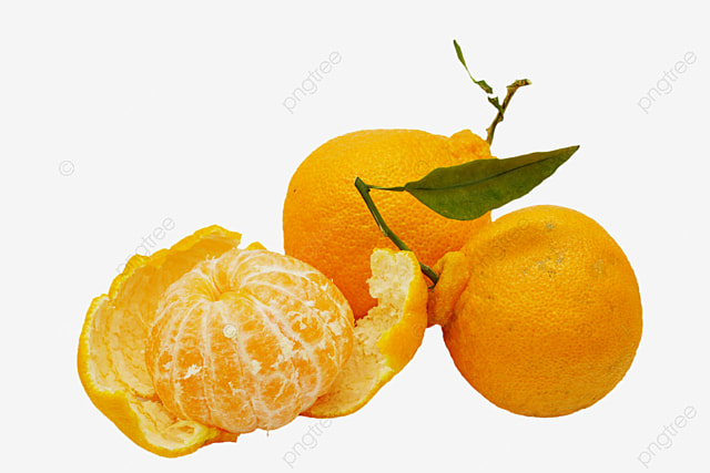 EPS Vector - With menu ugli fruit in the cartoon fridge. Stock Clipart  Illustration gg110651607 - GoGraph