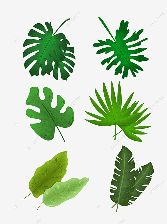 Collection Of Cartoon Tropical Green Leaves Vector Ad Cartoon Png Transparent Clipart Image And Psd File For Free Download Pngtree has millions of free png, vectors and psd graphic. pngtree