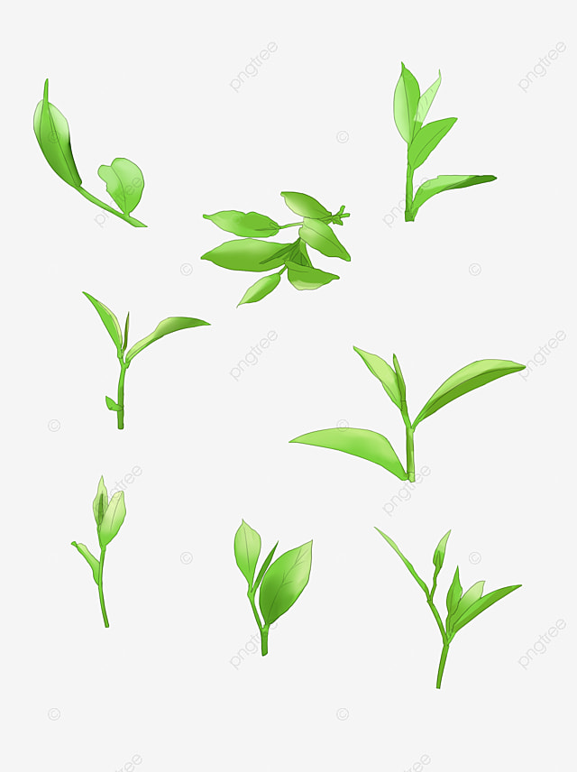 Green Tea Leaf Png Elements Of Various Shapes Plant Leaf Green Png Transparent Clipart Image And Psd File For Free Download