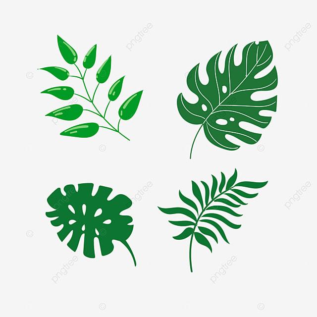 pisang daun segar kecil daun kartun daun besar tala patta png dan vektor dengan latar belakang transparan untuk unduh gratis pisang daun segar kecil daun kartun