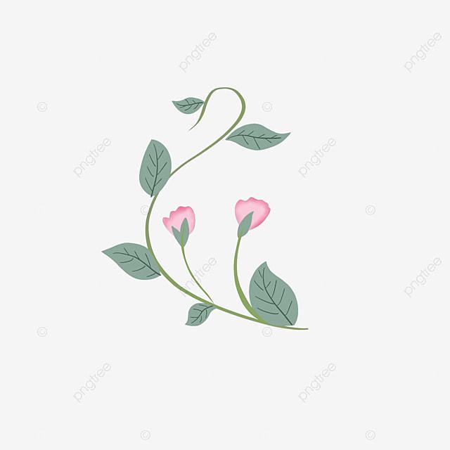 Gambar Ilustrasi Tanaman Bunga Ilustrasi Tanaman Bunga Anggur Kecil Segar Menanam Anggur Bunga