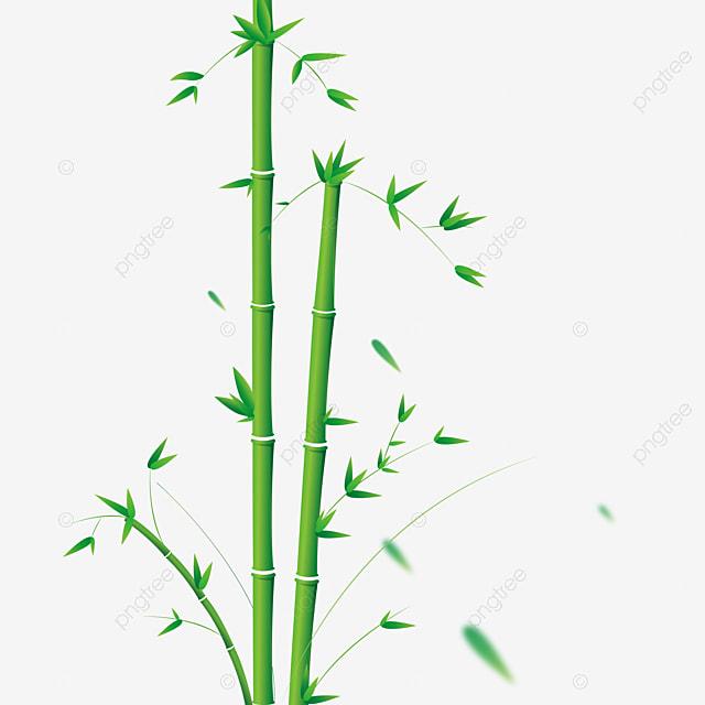 vektor png bambu yang digambar tangan desain grafis desain poster desain dekorasi png dan vektor dengan latar belakang transparan untuk unduh gratis https id pngtree com freepng vector hand drawn bamboo png 5457809 html
