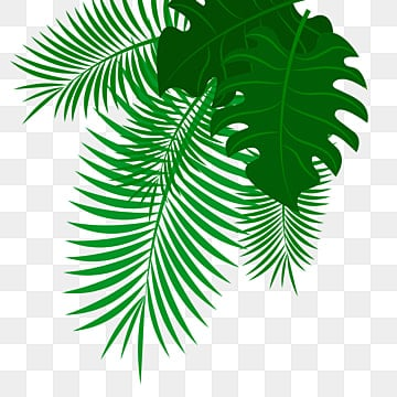 Palm Leaves Png Images Vector And Psd Files Free Download On Pngtree Lovepik provides 61000+ tropical leaves photos in hd resolution that updates everyday, you can free download for both personal and commerical use. https pngtree com freepng palm leaves 5460134 html