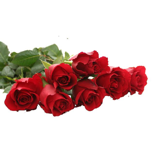 Beautiful Red Rose Png Beautiful Rose Red Rose Red Rose Png Png