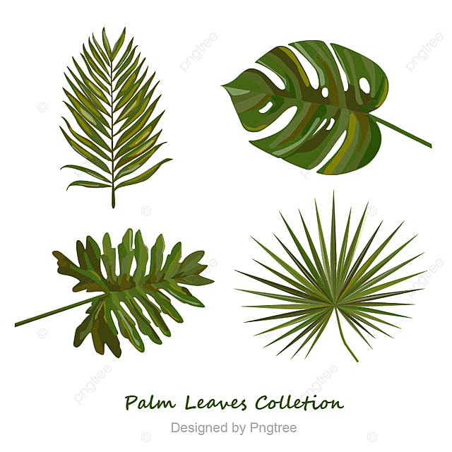 Palm Leaves Colletion, Palm Leaves, Leaves, Green PNG and Vector