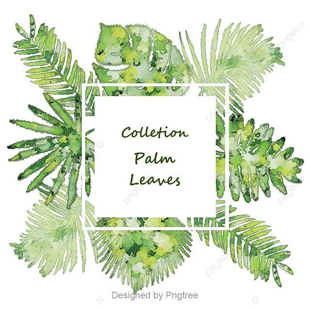 feuilles de palmier colletion, Feuilles De Palmier, Culture ReligieusePNG et PSD