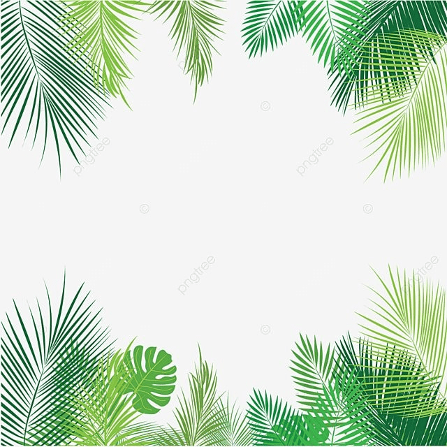 palm leaves png  vector  psd  and clipart with transparent