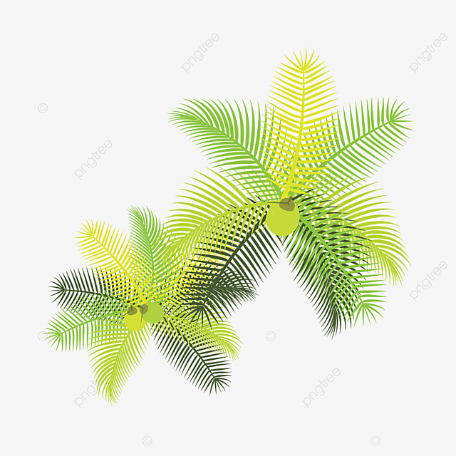 Tropical Leaves With Coconuts, Tropical Leaves, Flowers ...