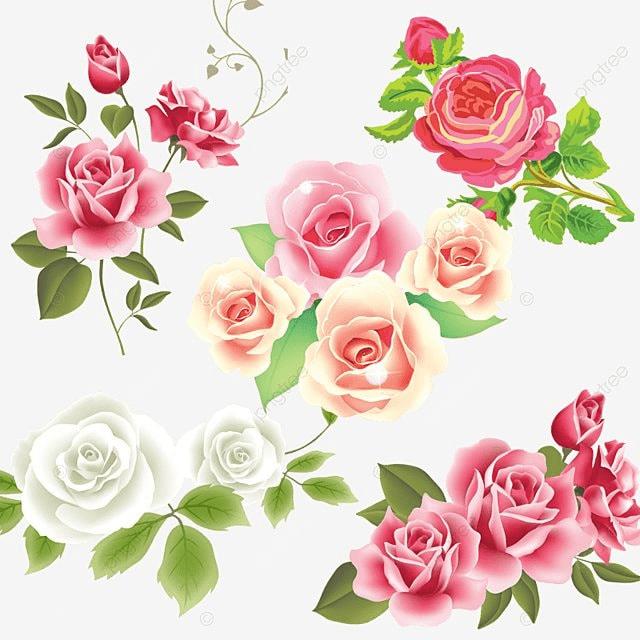Pink White Rose Flower Vector Pink Rose Flower Vector Png