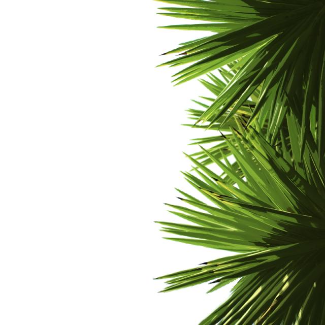 Green Palm Leaves Green Palm Leaf ไฟล์ PNG และ PSD สำหรับ ...