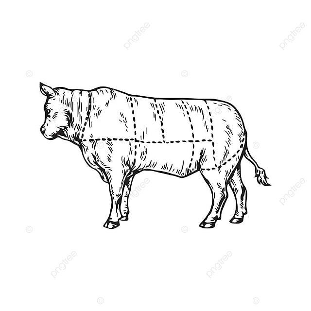 Dessin Boucher un dessin la viande de vache boucher fait partie boucher de la