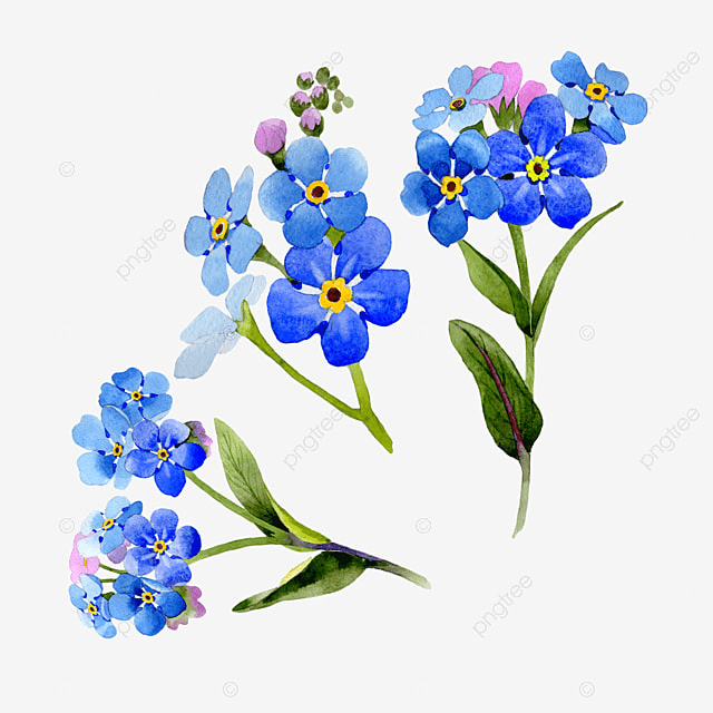 Watercolor Flowers Png Vector Psd And Clipart With: Flowers Watercolor Vector Background, Flower Watercolor