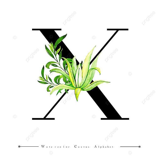 Alfabeto Letra X Con Acuarela Cactus Y Hojas De Fondo Acuarela Color ...