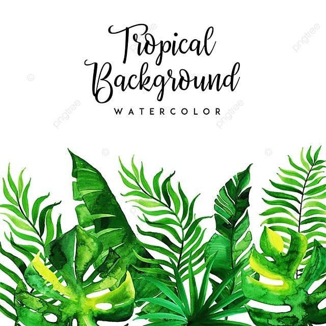 feuilles et floral information aquarelle tropical