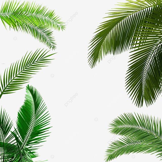 des feuilles de palmier palmier feuille palmier