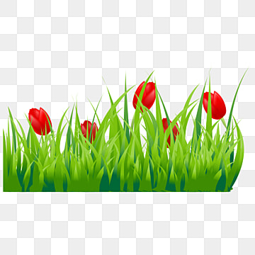 Tulip PNG Images | Vector and PSD Files | Free Download on ...