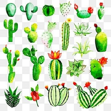 watercolor cactus collection png images vectors and psd