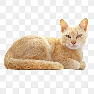 Gato Imagens Png 13000 Recursos Graficos Para Download Gratuito
