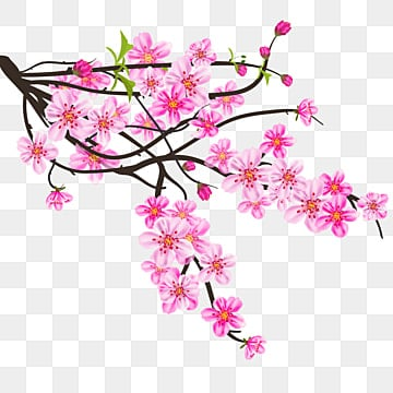 Bunga Sakura Png Images Vector And Psd Files Free Download On