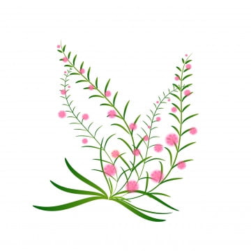 Watercolour Flowers PNG Images | Vector and PSD Files | Free