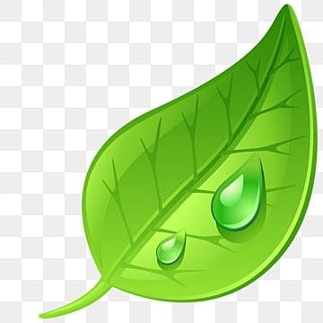 Green Leaves Clipart Set Vector - Download Free Vectors, Clipart Graphics &  Vector Art
