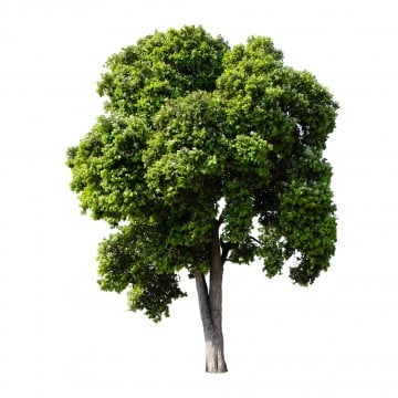 Tree Png Images Vector And Psd Files Free Download On Pngtree