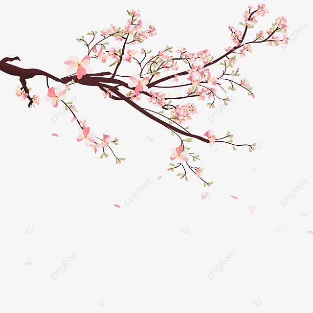 Sakura Background With Blossom Cherry Branches Sakura Blossom Drawn Png And Vector With Transparent Background For Free Download