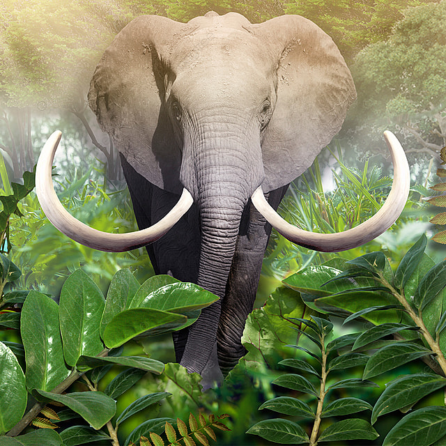 Elephant Out Of The Jungle Wallpaper For Wall 3d Illustration 3d Rendering Interior Abstract Africa Png Transparent Clipart Image And Psd File For Free Download Elephant free download png resolution: elephant out of the jungle wallpaper