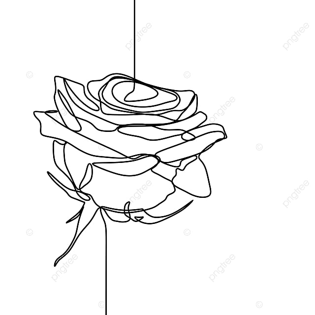 One Line Drawing Of Rose Flower Minimalist Design Isolated On White