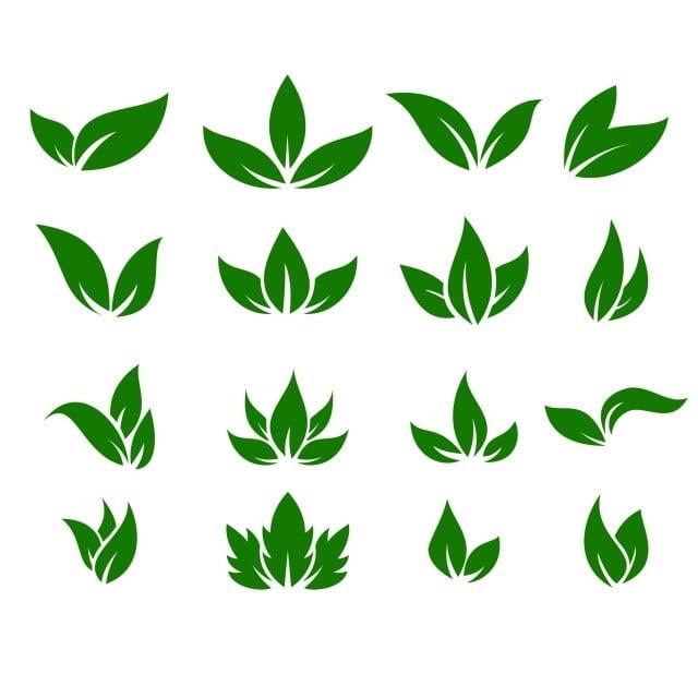 ورقة الرموز ناقلات تصميم أوراق إيضاح مفهوم الخضراء الطبيعة منعزلة قسط ورقة الشجر أيقونة معزول Png والمتجهات للتحميل مجانا