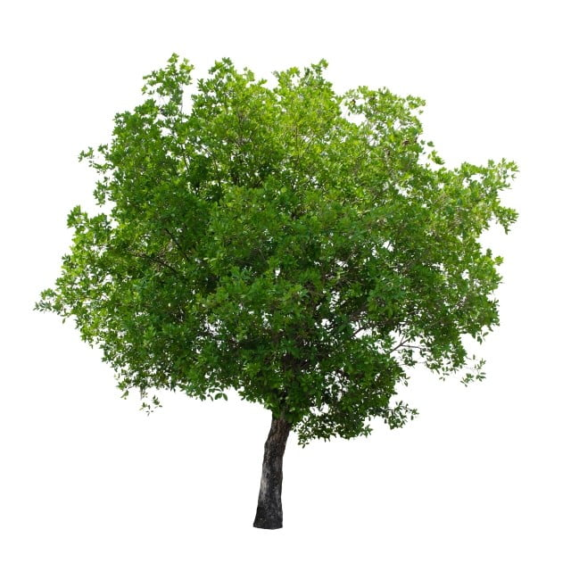 Image result for trees white background
