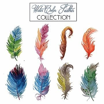 Watercolor Feather Collection, Collection, Watercolor, Art PNG and Vector